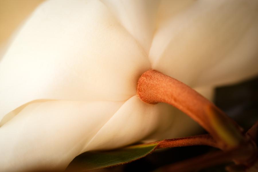 Sweet Magnolia Charm