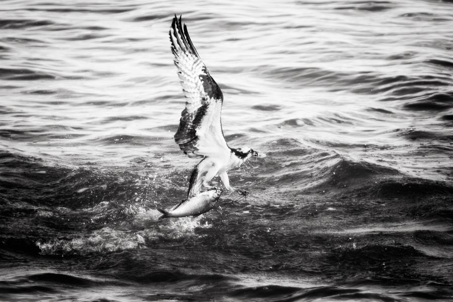 Black and White Coastal Birds