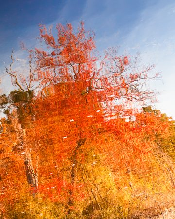 Abstract reflection of Autumn leaves and blue skies.