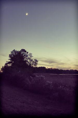Crescent moon above a marsh landscape.