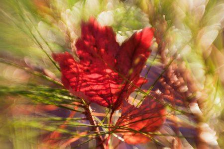 End of Autumn, last fallen leaf